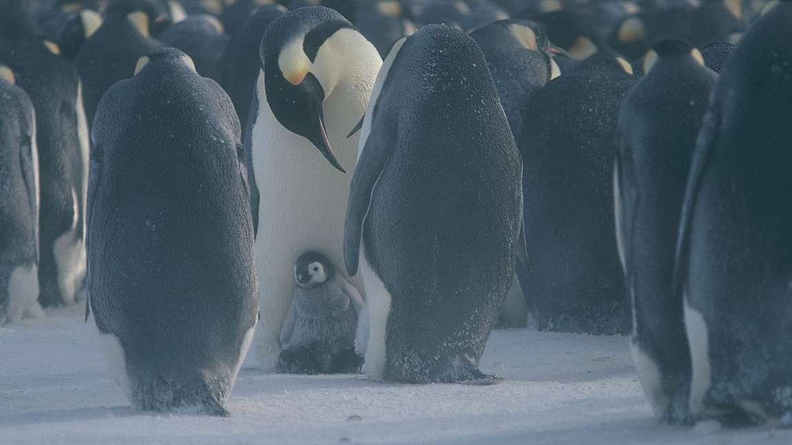 экспертов смотреть фотографии пингвинов и белых мишек пытается